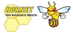 Hornet Pest Management